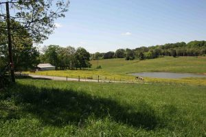 Real Estate & Farm Liquidation Auction @ White Pine   Tennessee   United States